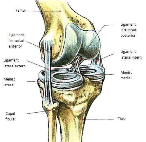 Ruperea ligamentelor articulației umărului cum se tratează. Cere părerea specialistului!