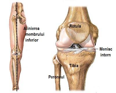 articulația genunchiului se ridică Ligamentele de șold rănesc atunci când ghemuite