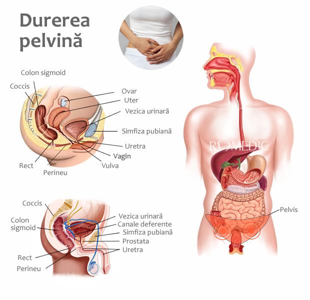 dureri în articulația pelvină erizipelele tratamentului articulației cotului