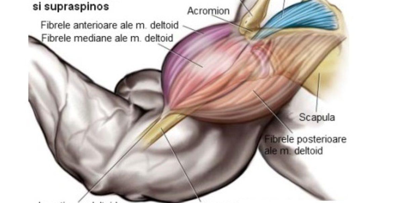 culturism pentru dureri în articulația umărului pastile de tratament articulare bune