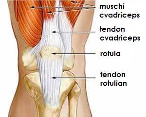 tratamentul rupturii tendonului genunchiului
