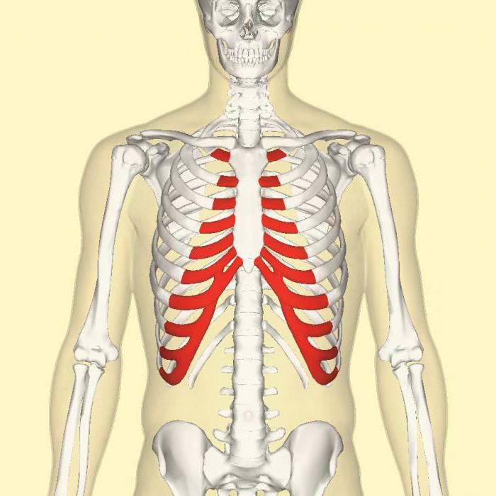 Preparate pentru restabilirea țesutului cartilajului din coloana vertebrală - Masaj November