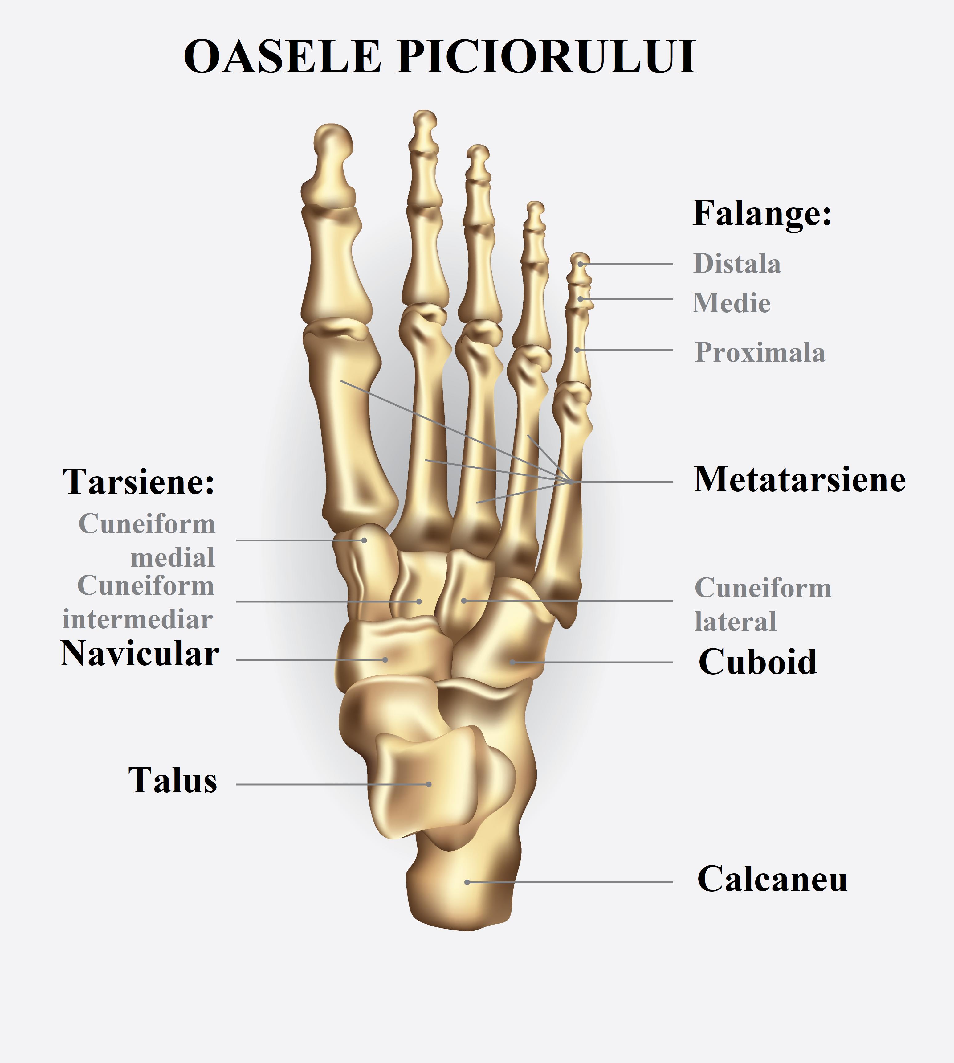 articulațiile picioarelor și călcâielor întinzând dureri de șold