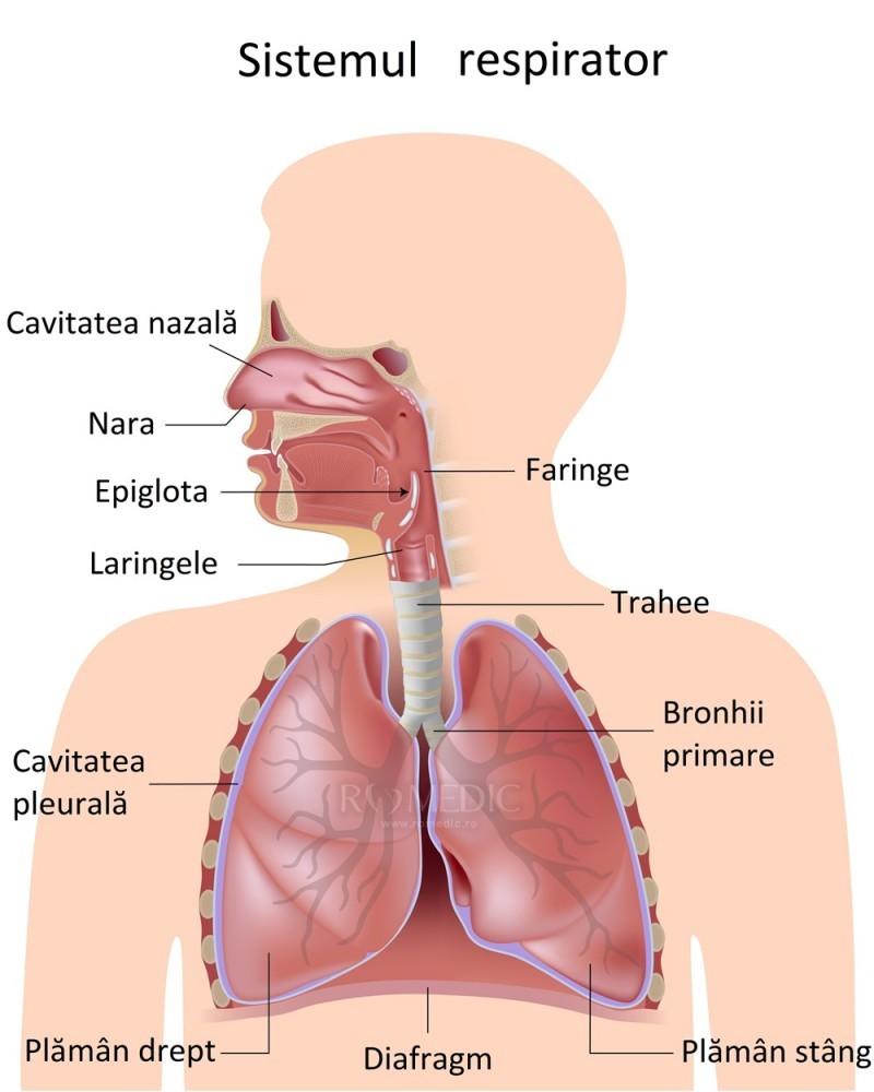 artroza gradului 2 al articulației gleznei tratamentul coxartrozei displazice a articulației șoldului