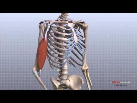 Articulațiile rănesc toamna și primăvara - Articulațiile doare primăvara