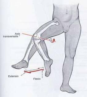 îmbinări după camera de aburi un remediu pentru durerea în articulațiile genunchilor