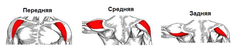 Durere la umăr - Cauza, diagnostic, exercițiu și tratament