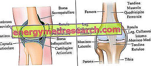 articulația artificială a genunchiului este menisci de genunchi doare ce să facă