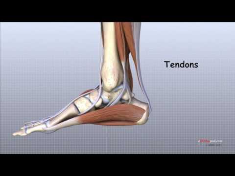 Articulațiile mâinilor rănesc picioarele degetelor
