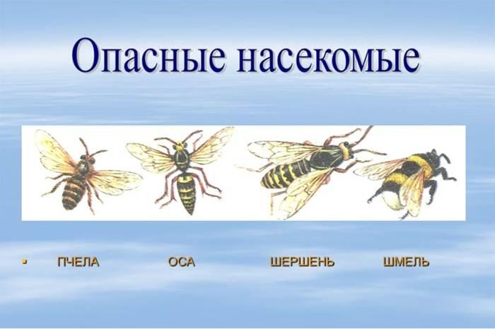 albine moarte din dureri articulare
