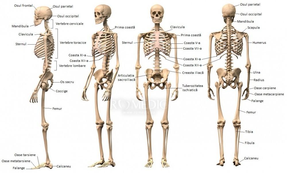 boli ale articulațiilor mlăștinoase