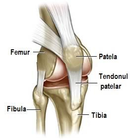 articulația genunchiului se ridică cum să tratezi articulațiile cu reumatism