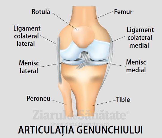 Boala articulației genunchiului și simptomele acestora - Navigare principală