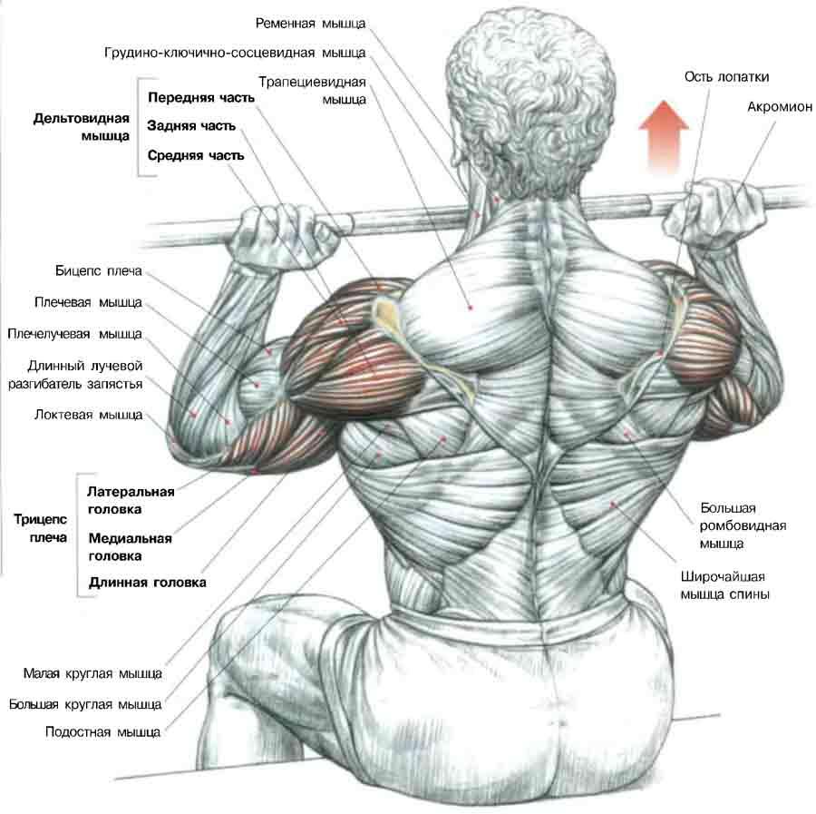 Articulațiile brațelor și ale umerilor doare ce este. Articulațiile brațelor și ale gâtului