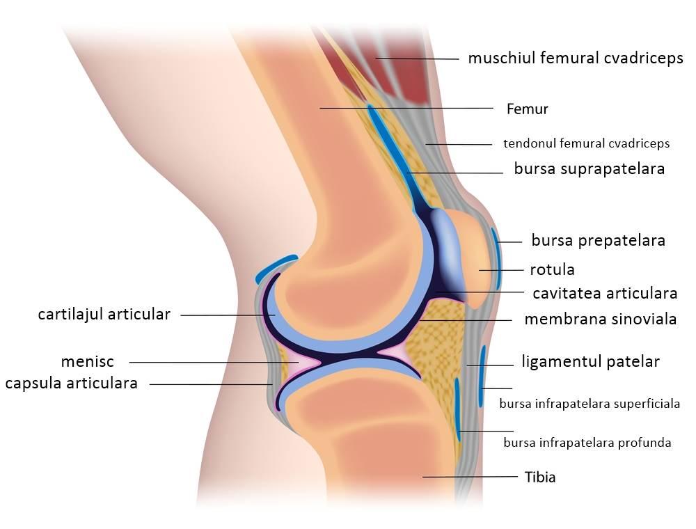 Durerea Articulatiilor - Tipuri, Cauze si Remedii, Tratament articular caripazim