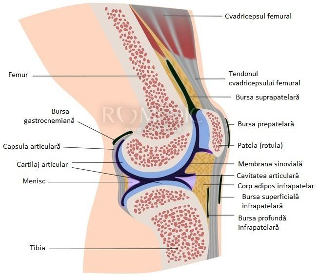 amplificarea articulației genunchiului