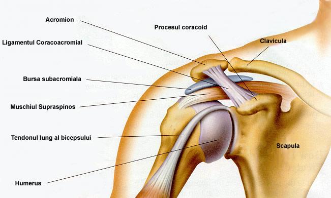 Articulațiile din umeri doare la ridicarea brațelor