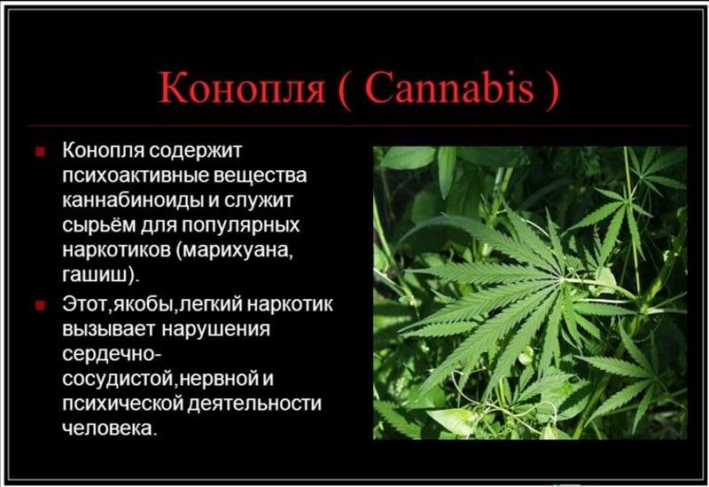 Dependenta de canabis (marijuana): cum o recunosti si cum se trateaza