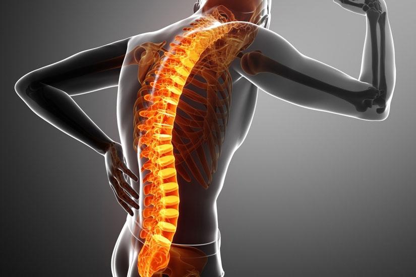 articulațiile șoldului și partea inferioară a spatelui