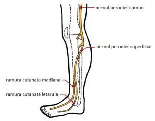 inflamația capsulei articulației umărului ligamentelor și tendoanelor cum să elimini durerea articulațiilor șoldului