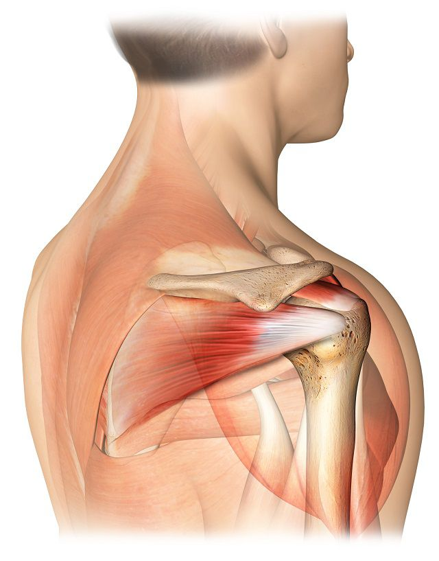 unguent pentru articulațiile genunchiului teraflex