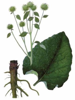ce plante medicinale în tratamentul artrozei