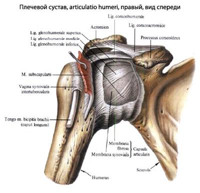deteriorarea manșetei rotative a articulației umărului stâng