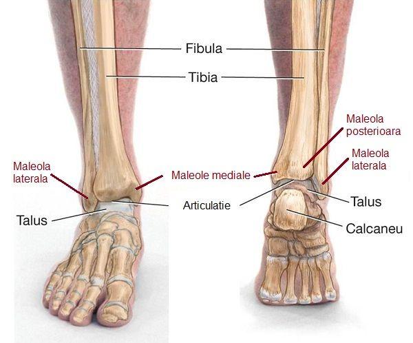 dislocarea timpului de recuperare a articulației gleznei deteriorarea articulației degetului inelar