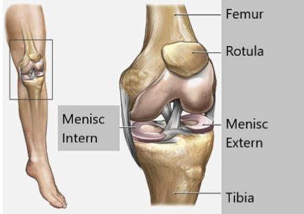 durere după îndepărtarea meniscului genunchiului