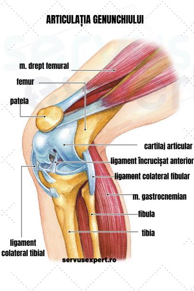 durere și rigiditate la nivelul articulațiilor genunchiului