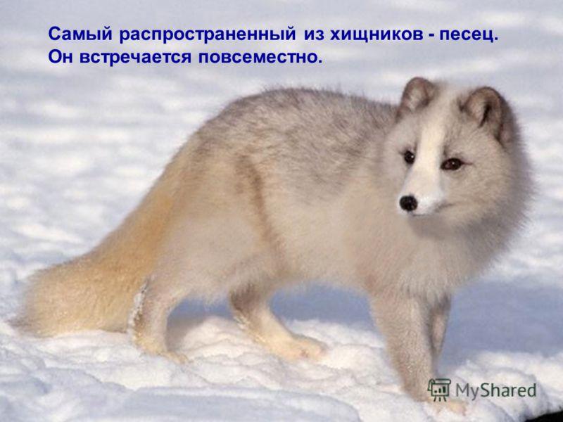 restaurare comună arkhangelsk