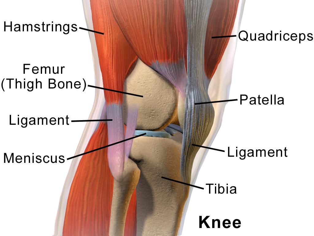 nervii la nivelul articulației genunchiului