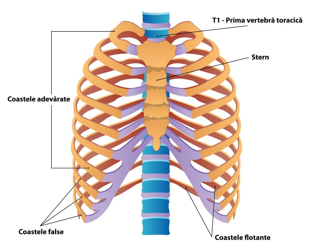 Fractura costală - simptome, riscuri, tratament, evoluție (în cât timp se vindecă)