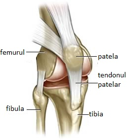 scleroza articulației genunchiului