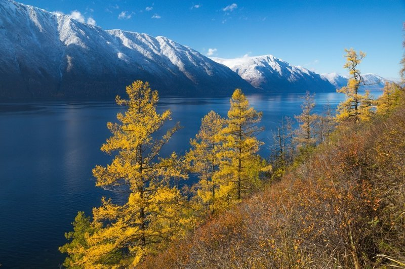 tratament comun în Altai