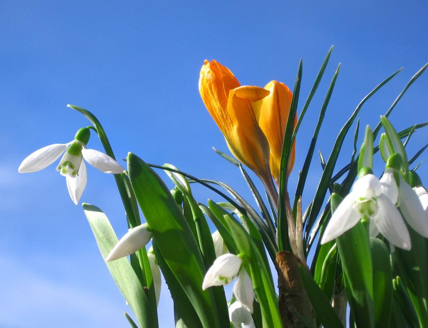 tratamentul articulațiilor de primăvară caldă