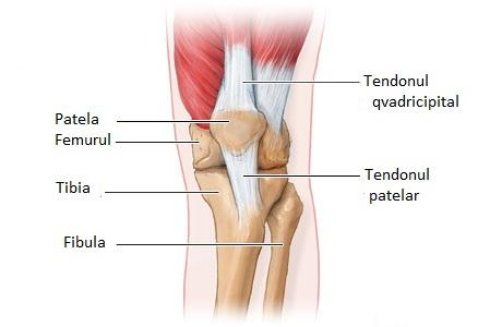 tratamentul rupturii tendonului genunchiului artropantă cremă articulară Preț