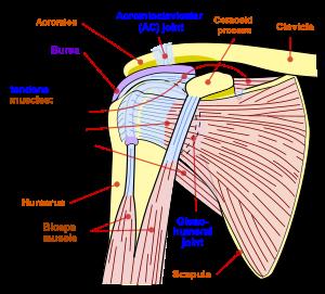 Tumoare în articulația umărului - baremi.ro