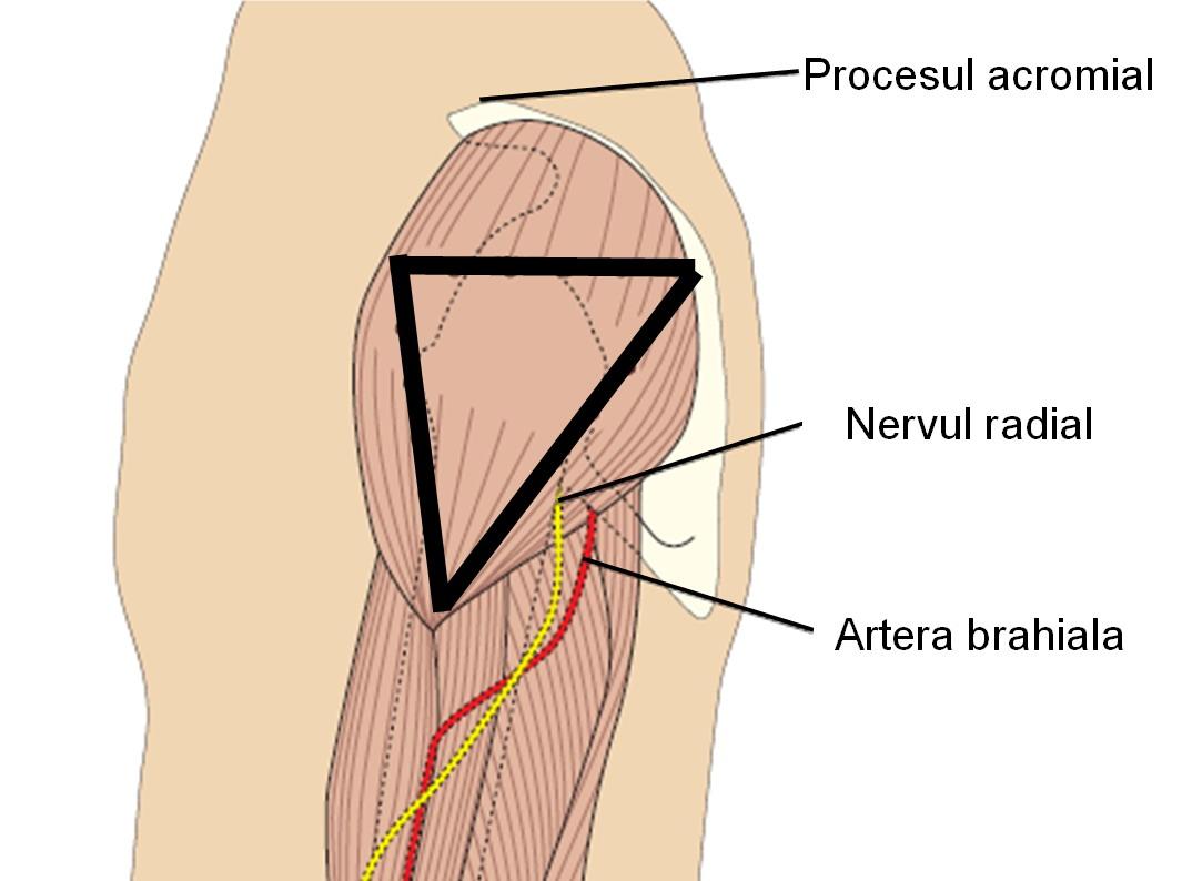 articulația superioară a coapsei doare
