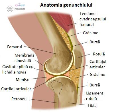articulația genunchiului apare