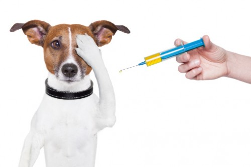 medicină veterinară comună